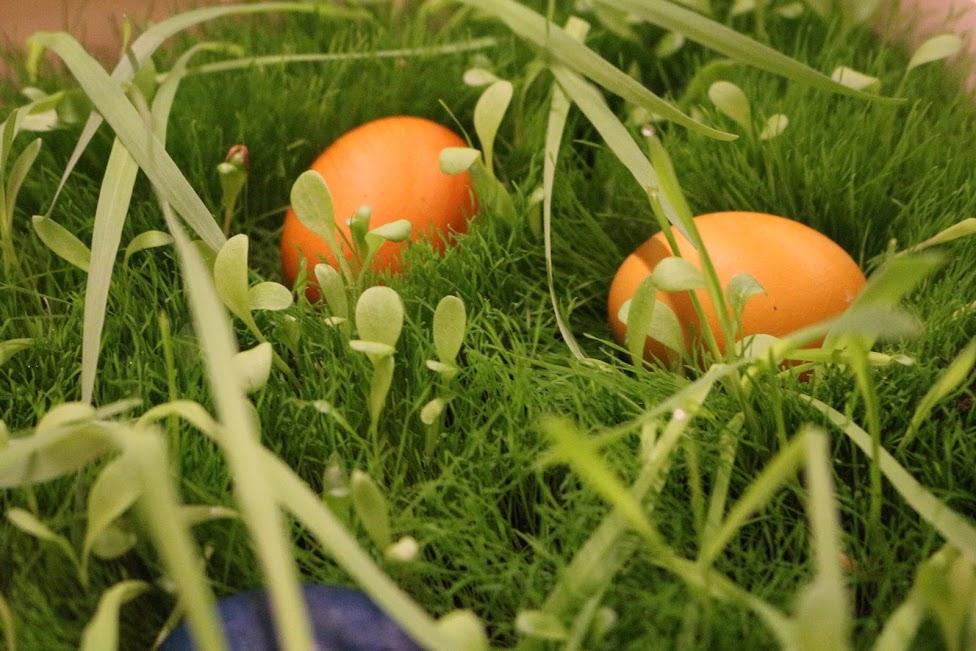 Ostern 14